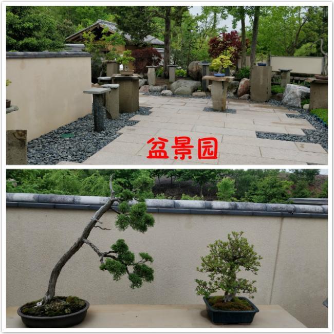 3 盆景园.jpg